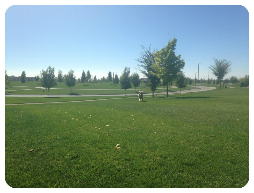 thefirsttwohours, kleiner park, meridian, idaho, running, run, spring