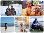 furbabies, puppies, dogs, vizsla, labradoodle, thefirst2hours, idaho
