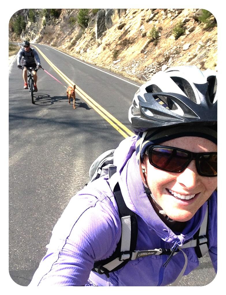 vizsla, dog breed, mountain biking, travel, adventure, run, motivation, exercise, fitness vacation