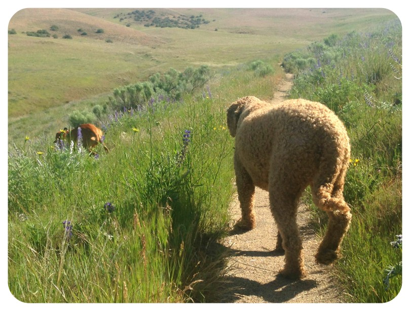 thefirst2hours, vitamin g, exercise, cognitive function, wellness, health, exercise, vizsla, labradoodle, ridge to rivers, idaho