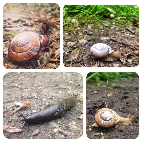 snails, nature, bugs, creatures, photography, washington