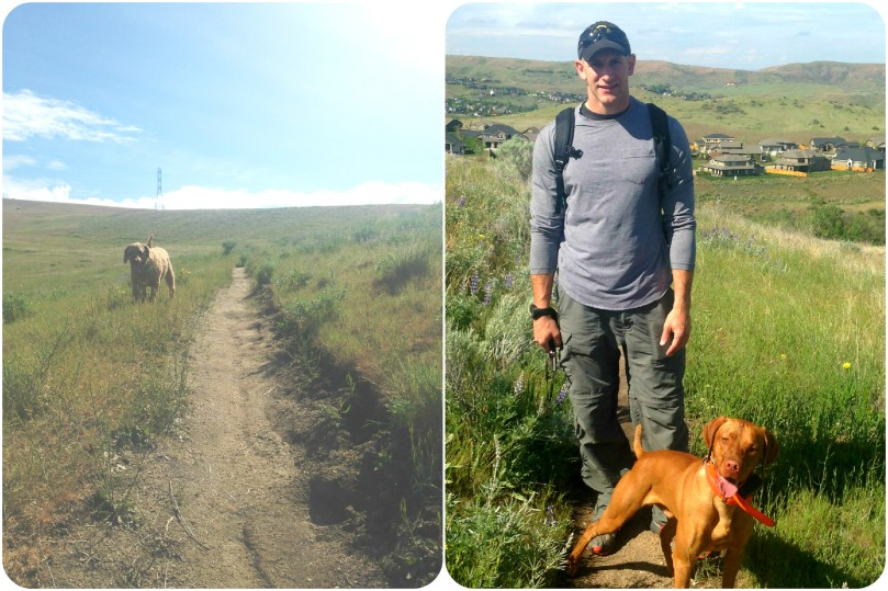 vizsla, hike, hiking, trail, trailhead, labradoodle, fisher, thefirst2hours, vitamin g, fresh air, exercise, fitness, inspiration