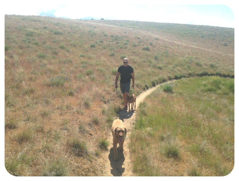 ridge to rivers, dog, pet, vizsla, labradoodle, hiking, trail, trail run, run, thefirst2hours, exercise, vitamin g, green space
