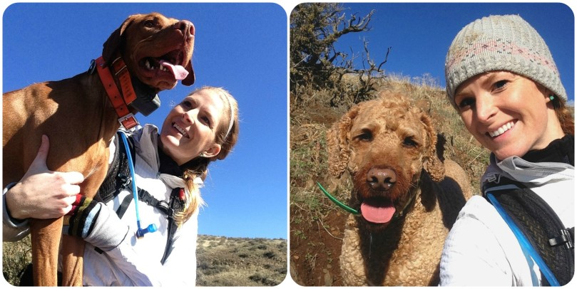 the benefits of hiking with dogs, vizsla, labradoodle, how fast to vizsla's run, fastest dog, most athletic dog, best hunting dogs, best family dogs